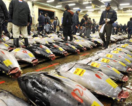Image gallery japan fish for Japanese word for fish